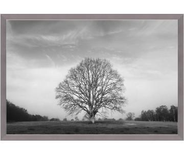 Strom života foto 10 s rámem