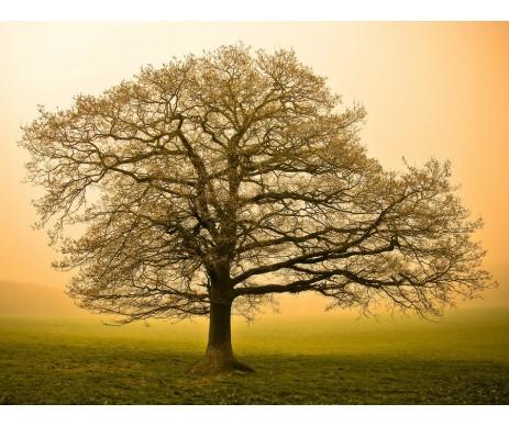 Fotografie stromu č. 14 pro zhotovení obrazu stromu života. Obraz je vyrobený bez ozdobného rámu.