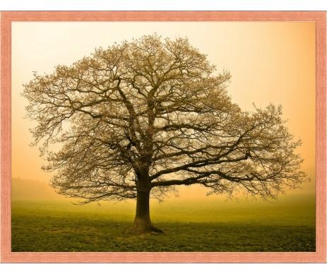 Strom života foto 14 s rámem
